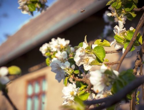 Northern California Starts Spring Homebuying Season Strong