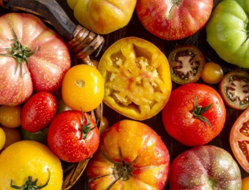 Crop of the Month: Behold the Heirloom Tomato