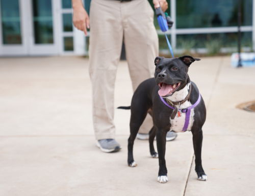 2019 Homes for Dogs Project Adoption Events in Sacramento