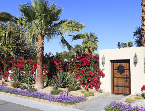 How-To: Ditch Your Lawn for Drought Resistant Landscaping