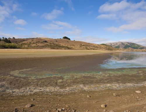 How To: Conserve Water at Home During the California Drought